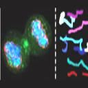 Quantitative cell biology symposium: June 18 2009 logo