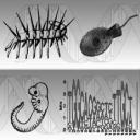 Evolution and Development Seminar Series logo