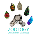 Behaviour, Ecology & Evolution Seminar Series logo