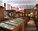 Sedgwick Museum of Earth Sciences logo