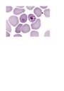 #<Talk:0x7f902523dd60> logo